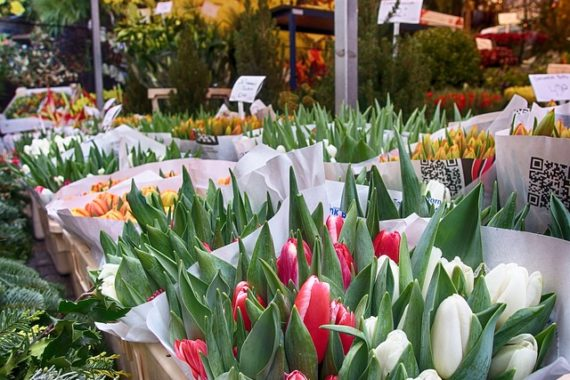 Выбор тюльпанов для продажи